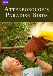 Attenborough's Paradise Birds film afişi